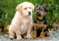 Different Puppies Together In Same Home